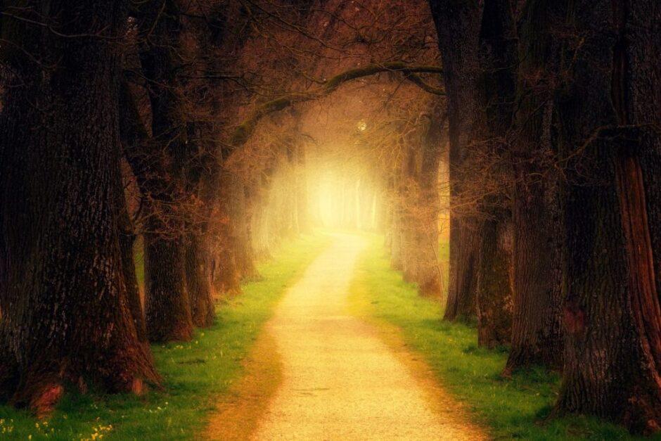 森の中の道。向こうから光