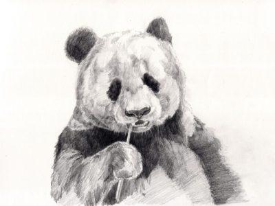 panda-drawing