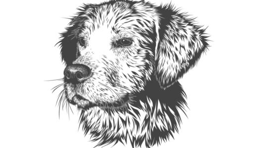 線画スキャン・線画抽出の方法|基本手順と必要なソフト・アプリまとめ