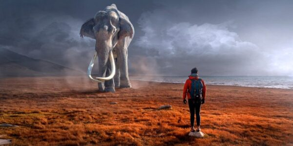 象と人。象が奥にいて、人が手前にいる。